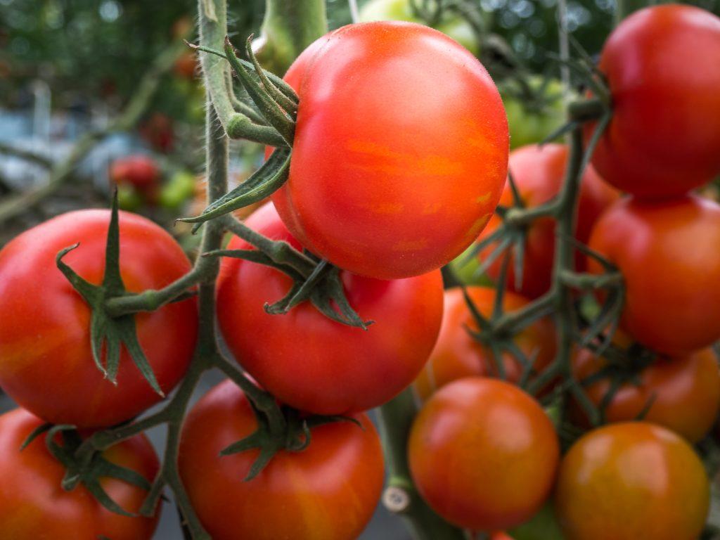 Nams tomaatti