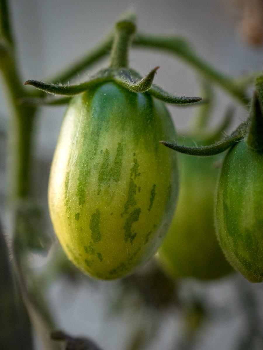 speciaalit tomaatit