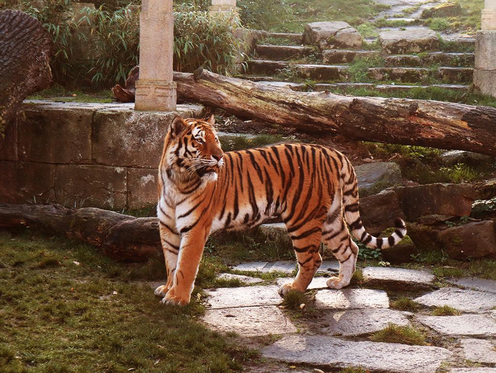 hannoverin eläintarha
